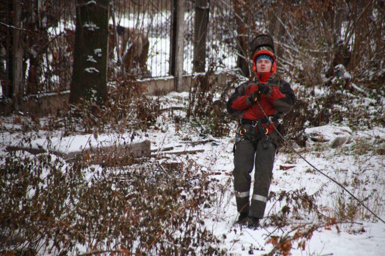 Спил деревьев методом промышленного альпинизма.