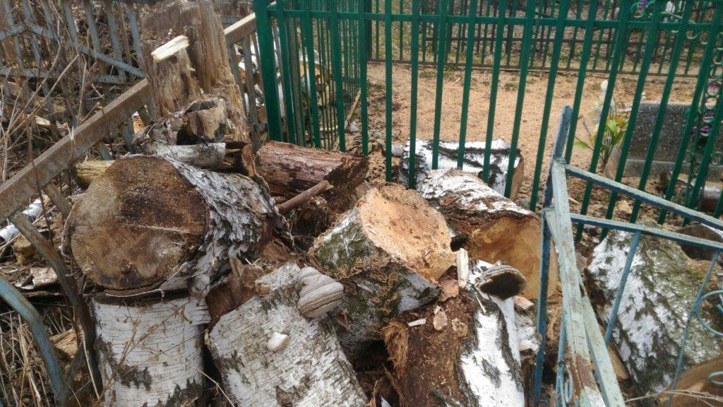 """Удаление сгнившей березы на кладбище в г. Дмитриев. Фото """"После"""""""