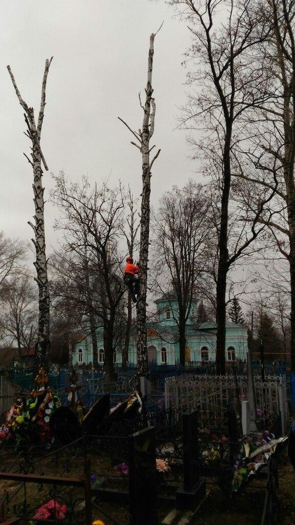 Процесс удаления сгнившей березы на кладбище методом веревочного доступа. Город Дмитриев.