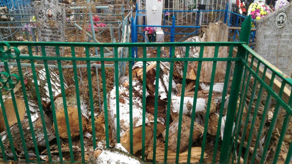 Удаление двух сгнивших берез на кладбище. Город Дмитриев.