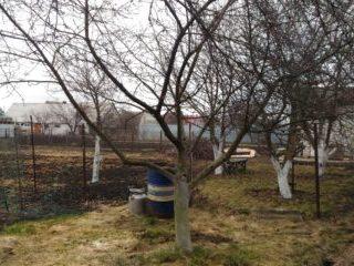 Удаление яблони с земли. Город Курск.